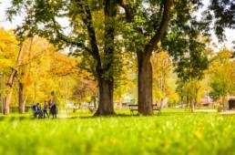 Espaces verts, terrains, jardins intérieurs, parcs